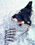 anglers, angling, fish, fishing, ice fishing, ice fishing, ice fishing, jig, dap, whitefish, winter fishing