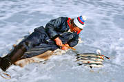 angling, fishing, ice fishing, ice fishing, whitefish, winter fishing