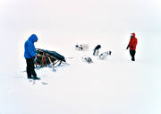angling, char, char fishing, dogs, dogsled ride, Essand lake, fishing, fishing through ice, greenland dogs, ice fishing, ice fishing, light, sled dog, sled dogs, sledge dog, sledge dogs, sledge trip, snow, snow storm, storm, storm, stormy weather, white, wild-life, winter, äventyr