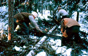 cutting, felling, forest worker, forest worker, forestry, logging, old, old, sow, såga, timber, woodcutter, woodland, work