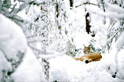 animals, cat animal, lynx, lynx, lynx, mammals, predator, snow, winter
