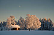 ambience, ambience pictures, atmosphere, birches, christmas ambience, cold, cold, cottage, frosty, frosty, moon, season, seasons, summer cottage, summer cottage, tree, winter