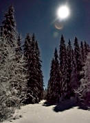 ambience, ambience pictures, atmosphere, landscapes, moonlight, månljust, night, night picture image, pines, season, seasons, supermåne, winter, woodland