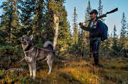 elk dog, guide dog, hunter, hunting, hunting moose, Mixa, moose hunter, moose hunting, swedish moosehound