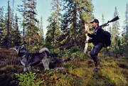 guide dog, hunting, hunting moose, moose hunting