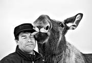 animals, black-and-white, friends, friendship, happiness, happy, human, joy, lick, licks, mammals, master, moose, moose, s/v
