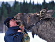 animals, farmed, friends, friendship, happiness, happy, human, joy, lick, licks, mammals, master, moose, moose, moose farm