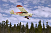 aeroplane, aviation, communications, Cub, fly, Piper, SE-EPF, ski flight, skies, sports flights, sports plane, Super Cub, touch down, touch down, touchdown, tree-tops, winter flying