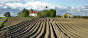 agriculture, cultivation, farmin, Jamtland, landscapes, potato field, potatoes, Rodon, spring, work