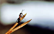 animals, ant, insects, needles, red wood ant