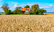 agriculture, agriculture land, buildings, corn, grains, cottage, crop, harvest, grainfield, house, idyll, landscapes, red-painted, ripe, season, seasons, skörda, skördetid, Småland, summer, svensk, Sweden, vete, vetefält, Visingsö, work