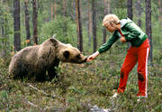 animals, bear, brown bear, fearless, fed, mammals, predators, tame, teddy bear, unshy, ursine