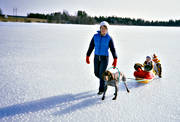 boys, brothers, children, dogsled ride, fishing, fishing through ice, german shorthaired pointer, ice, mother, outdoor, outside, sled, sled dog, sled dogs, sledge dog, sledge dogs, sledge trip, spring-winter, spring-winter ice, wild-life, winter, winter sport, äventyr