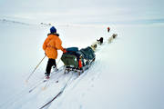 dogs, dogsled, dogsled ride, mountain, mountain trip, private, sled dog, sled dogs, sledge ride, wild-life, winter, äventyr