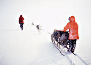 dogsled ride, sled dog, sled dogs, sledge dog, sledge dogs, sledge trip, wild-life, winter, äventyr