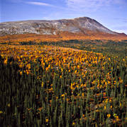 aerial photo, aerial pictures, autumn, autumn colours, drone aerial, Herjedalen, mountain, mountain, mountain forest, mountain pictures, national park, near mountains, Sonfjället, woodland