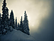fog, Jamtland, landscapes, nature, pines, seasons, winter, woodland