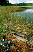angling, angling, casting rod, fishing, Grevetjarn, Lidsjo, to angle, trout