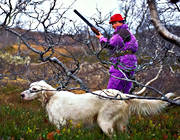 alpine hunting, animals, bird dog, bird hunting, booth, dogs, english setter, hunting, mammals, pointing dog, setter, white grouse hunt