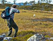 alpine hunting, bird hunter, hunter, hunting, pointing dog, shoot, shot, white grouse hunt, white grouse hunter