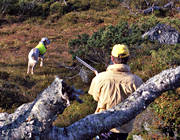 alpine hunting, booth, dog, english setter, hunting, pointing dog, white grouse hunt, white grouse hunter
