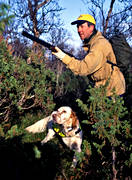 alpine hunting, bird hunting, booth, dog, hunter, hunting, pointing dog, setter, white grouse hunt