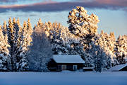 ambience, ambience pictures, atmosphere, cabins, christmas ambience, heavy snow buildup, Jamtland, landscapes, Löfsåsen, pines, season, seasons, snow, spruce forest, vinterro, winter, winter forest, woodland