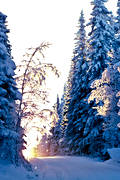 ambience, ambience pictures, atmosphere, backlight, christmas, christmas ambience, christmas card, christmas pictures image, road, season, seasons, snow, snow-weighted, spruce forest, sunset, winter, winter ambience