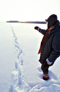 animals, bergstrand, ice, lake, mammals, snow, tracks, trapper, ulv, winter, wolf, wolf, wolf tracks, wolves