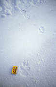 animals, canidae, mammals, road, snow, tracks, ulv, winter, wolf, wolf, wolf tracks, wolves