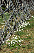 biotope, biotopes, fence, fence, meadowland, meadows, nature, season, seasons, spring, tallhed chalets, wood anemone, wood anemones, äng